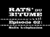 Rats du Bitume - Ep02 - Salyx Babylonica