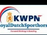 HP Stables Dutch warmblood dressage horses for sale Holland Netherlands