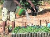 AFRICA NEWS ROOM du 22/06/12 - Guinée - Agriculture atteindre l autosuffisance alimentaire - partie 1
