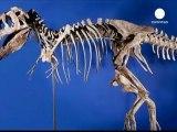 Sotto sequestro negli USA uno scheletro di dinosauro.