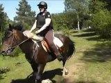 dur dur la découverte du cheval pour mon homme avec un cheval têtu...
