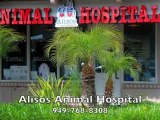 Alisos Animal Hospital 949-768-8308 Mission Viejo CA Veterinarian Animal Hospital
