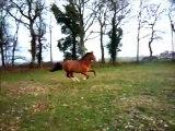 Tzigane de Massa cheval lusitanien