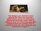 Bearded Dragon Habitat - bearded dragon supplies