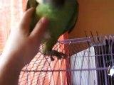 Jaco mon perroquet