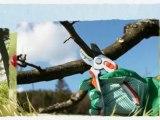 AAA Sherman Oaks Tree Service (818) 986-3426