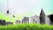 Sauvages en ville : une étonnante biodiversité urbaine sauvage