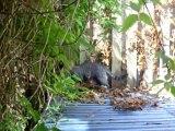 18. juli 2012 023 Tarzan kommer for tæt på og så blir Bluebell sur