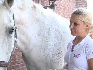 Grooming of horses