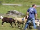 03-Concours chiens de Berger-Lac d'Estaing
