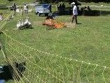 06-Concours chiens de Berger-Lac d'Estaing