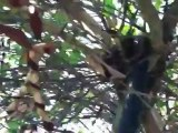 Live Bee Swarm Removal By Bee Green Natural Bee Removal ...
