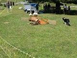 07-Concours chiens de Berger-Lac d'Estaing