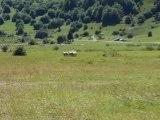 12-Concours chiens de Berger-Lac d'Estaing