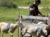 13-Concours chiens de Berger-Lac d'Estaing