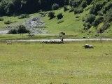 15-Concours chiens de Berger-Lac d'Estaing