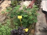 josep Pamies - Plantas Que Curan (Plantas Prohibidas...)