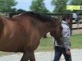 Cheval Equitation préparation jeux olympiques épisode 7