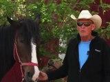 Horseback Riding Ottawa - What is a horseback trail riding adventure?