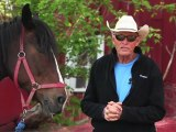 Horseback Riding Ottawa - What is the importance of horseback riding lessons?