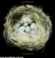 Sports Book Review: Nests: Fifty Nests and the Birds that Built Them by Sharon Beals