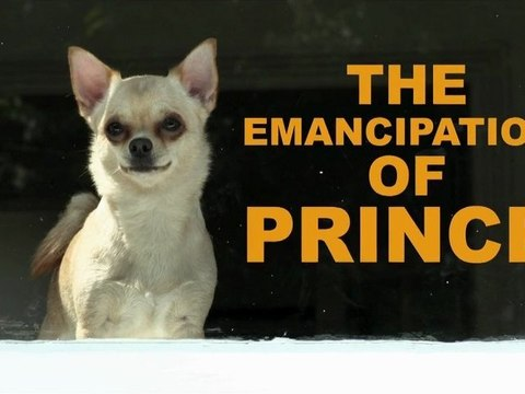 The Emancipation of Prince - a short film directed by Gavin O'Grady