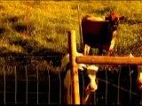 Clip de Lacuna Coil, Enjoy The Silence, vidéo et Paroles de chanson