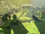 Qualité des eaux des rivières et des captages >Eau publique 8-6-12