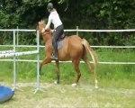 Essaies de chevaux le 31 juillet