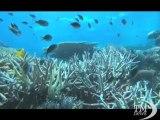 Allarme Grande barriera corallina: tumori della pelle nei pesci. L'Australia sotto il più grande buco dello strato di ozono