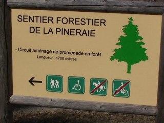 La forêt de Beynaves, une nature accessible