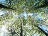 """Agriculture et forêts : conférence """"Droits de propriété et environnement"""" 2012 de l'ICREI"""