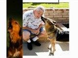 Como Enseñar A Un Perro A No Llorar Cuando Me Voy