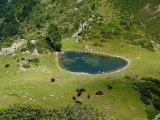 Les chevaux du soleil : Un troupeau de chevaux se détend dans l'étang d'estagnot - Couserans - Vallée de Bethmale