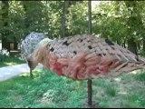 Exposition d'oiseaux Parc Colombière Dijon