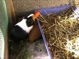* Bibi, Ti-mel et la carotte sur Tites Bouilles Du 76 *