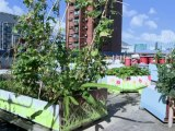 Rooftop farms flourish in space-starved Hong Kong