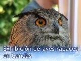 CRÓNICA Exhibición aves rapaces Grupo Aviar en Candás. Asturias
