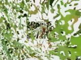 Diaporama Du 27 août 2006 au28 juin 2010 pour un déjeuner au soleil-Écran