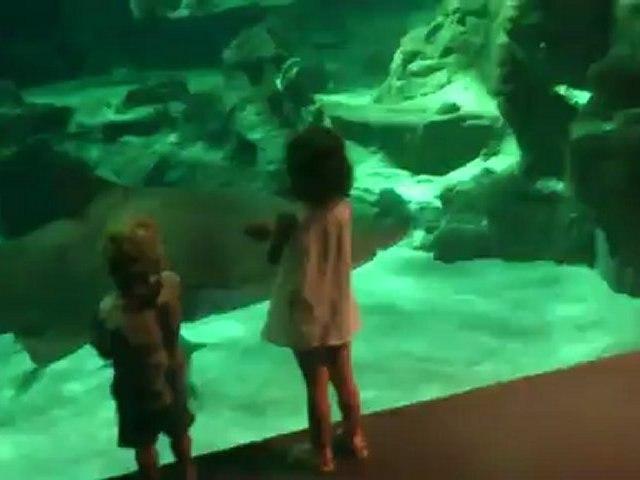 Aquarium Mare Nostrum Montpellier (Visite entière)