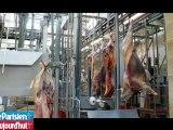 La fondation Brigitte Bardot veut recueillir une vache qui a fui l'abattoir
