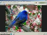 New web browser Internet Globe 2.0