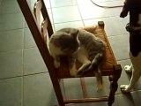 calin chien chat 002