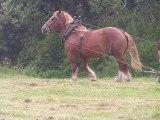 débardage jeune cheval