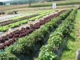 Randonnée de ferme en ferme à Saint-Michel-de-Chavaignes