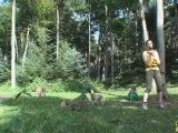 La Montagne des Singes refuge des Macaques de Barbarie en Alsace