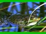 Babynoo - La mare aux grenouilles