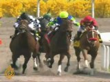 Injured US race horses given second chance