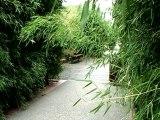 Vincennes et son jardin exotique espace vert rue de France