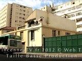 Vincennes a adopté trois vaches rue de France
